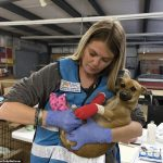California Wildfire: See Photos Of Abandoned Hospital For Stranded Animals