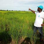 Herdsmen Set Benue Governor Ortom's Rice Farm On Fire