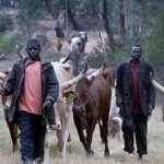 Nigeria Government Suspends RUGA Settlements For Herdsmen